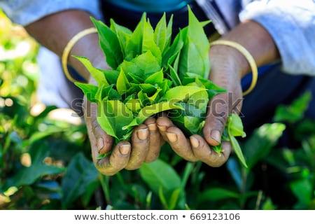 Tea ültetvény tájkép Sri Lanka hegy égbolt Stock fotó © Mikko