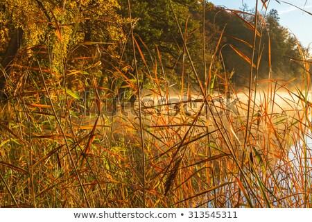paisaje · agua · lago · niebla · fondo · verde - foto stock © cozyta
