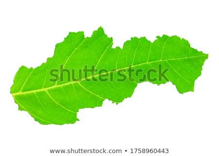Slovakya çevre harita yeşil ot ekolojik doğa Stok fotoğraf © speedfighter