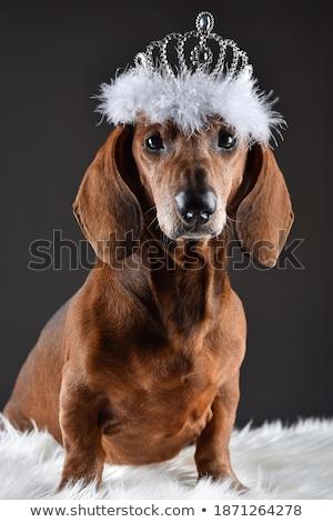 Foto stock: Escuro · cinza · estúdio · cão · feliz · jovem