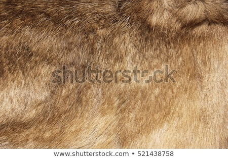 texture of natural fur Stock photo © OleksandrO