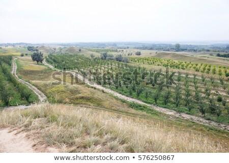 Cem norte Moldávia verde milho campos Foto stock © frimufilms