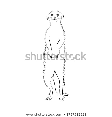 Mongooses standing on zoo sign Stock photo © bluering