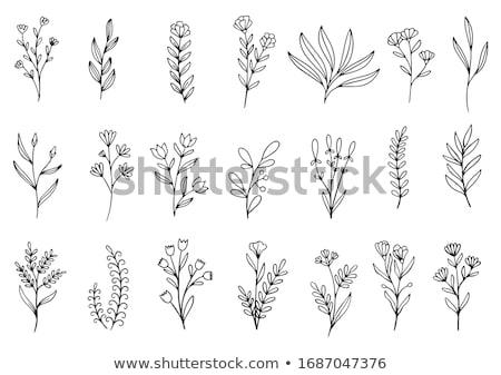 Virágok kézzel rajzolt gyűjtemény rajz virágmintás minta Stock fotó © frescomovie