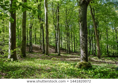 Golf course green in Nordic forest landscape Stock photo © Mps197