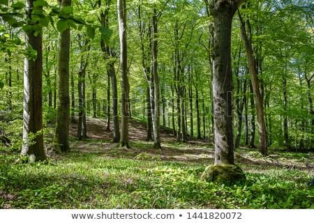 campo · de · golfe · verde · floresta · paisagem - foto stock © Mps197