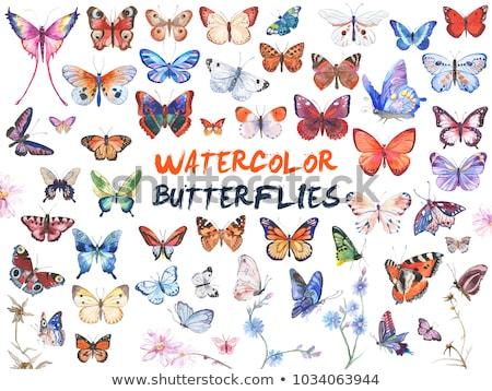 Vektör kelebekler ayarlamak beyaz kelebek doğa Stok fotoğraf © kostins