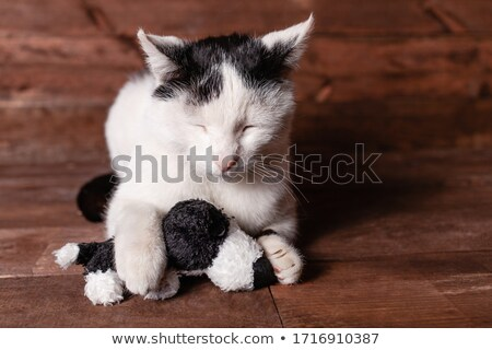 lovely grey cat lying and playing with its paws Stock photo © feedough