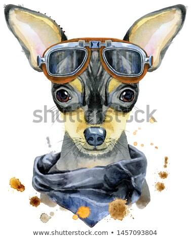 Acuarela retrato juguete terrier gafas de sol Foto stock © Natalia_1947