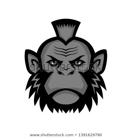 Csimpánz visel kabala ikon illusztráció fej Stock fotó © patrimonio