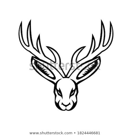 Jackalope Head Mascot Stock photo © patrimonio