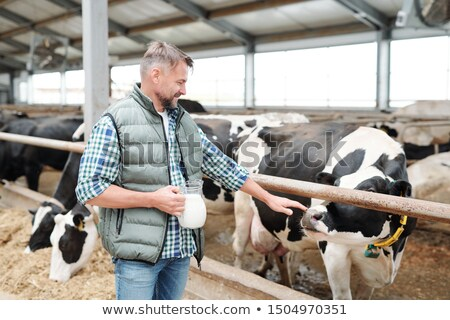 young worker of contemporary farmhouse with jug of milk touching one of cows stock photo © pressmaster