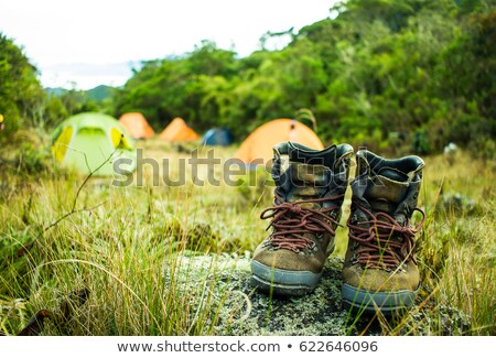 Traveller compass on the grass in the forest Stock photo © cookelma