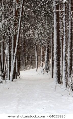 пути · зима · лес · ведущий · сумерки - Сток-фото © ruslanomega