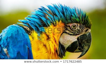 Kék citromsárga természet művészet madár toll Stock fotó © pinkblue