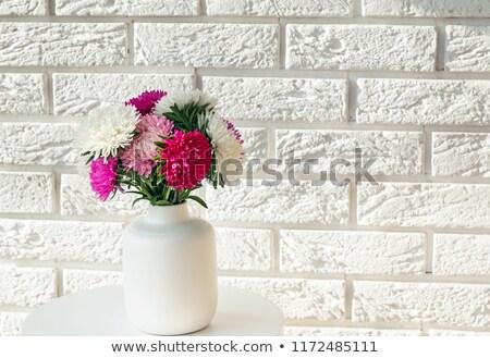 Kamienie różowy chryzantema kwiat Daisy Zdjęcia stock © Masha