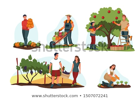 man picking grapes Stock photo © photography33