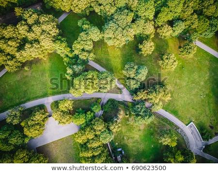 Zöld park fotó égbolt fa tavasz Stock fotó © cherju