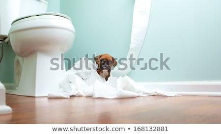little bad dog stock photo © djdarkflower