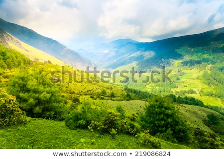 Green landscape with benches Stock photo © zzve