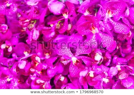 Purple · орхидеи · цветы · воды · свадьба · дизайна - Сток-фото © saddako2