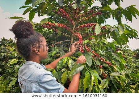 コーヒー豆 · ケニア · お金 · コーヒー · 旅行 - ストックフォト © kirill_m