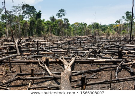 Logs for Charcoal Burning Stock photo © suerob