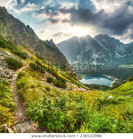 hegy · tájkép · tavacska · magas · víz · fa - stock fotó © kayco