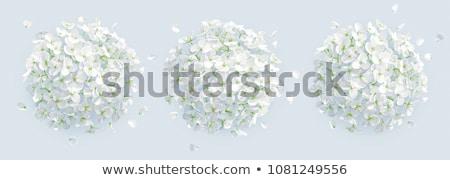 Fioritura fiore bianco erba verde fiore fiori primavera Foto d'archivio © OleksandrO