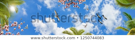 Kék ég Magyarország család természet utazás csoport Stock fotó © Fesus