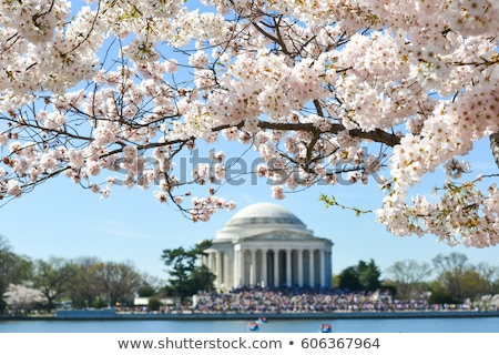 thomas jefferson memorial during the cherry blossom festival stock photo © rmbarricarte