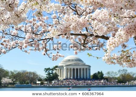 cseresznyevirágzás · Washington · DC · tavasz · égbolt · virág · fa - stock fotó © rmbarricarte