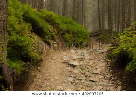 Hegy nyom Lengyelország erdő fa fa Stock fotó © 5xinc