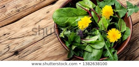съедобный одуванчик листьев салата можете оба Сток-фото © Klinker