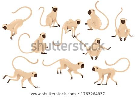 Stock fotó: Fej · majom · mosolyog · fehér · szemek · háttér