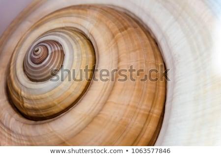 Schelpen verschillend geïsoleerd witte Stockfoto © Vitalina_Rybakova