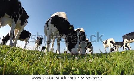 ストックフォト: 高い · 画像 · 新鮮な · 緑の草 · 青空