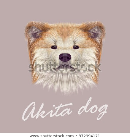 grey purebred dog breed Akita inu Stock photo © goroshnikova