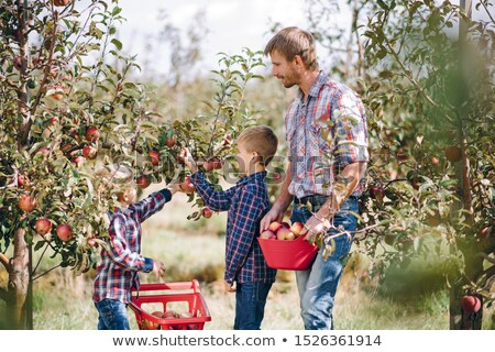 Mother with baby picking apples from an apple tree Stock photo © tommyandone