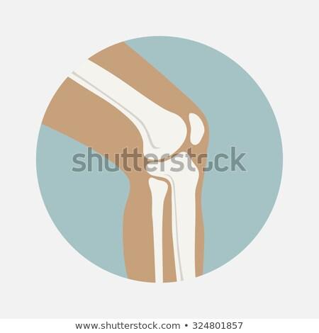 healthy human leg knee joints stock photo © tefi
