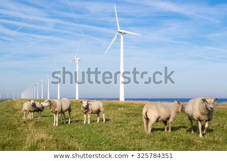 Sheep grazing in Front of Wind Turbines Stock photo © IS2