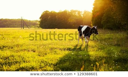 Scène boerderijdieren veld illustratie natuur landschap Stockfoto © bluering
