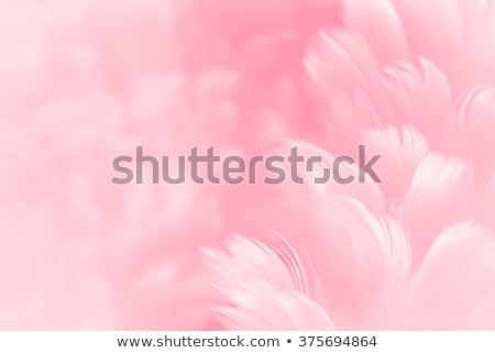 Stock photo: Cyclamens background