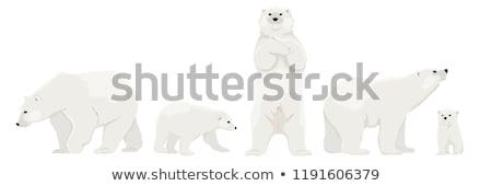 Cartoon ijsbeer illustratie permanente witte dier Stockfoto © cthoman