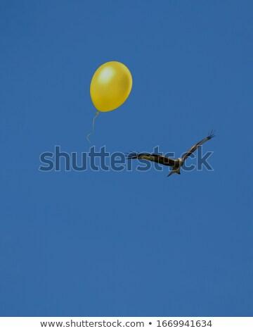 vektör · uçan · kuşlar · bulutlar · gökyüzü - stok fotoğraf © colematt