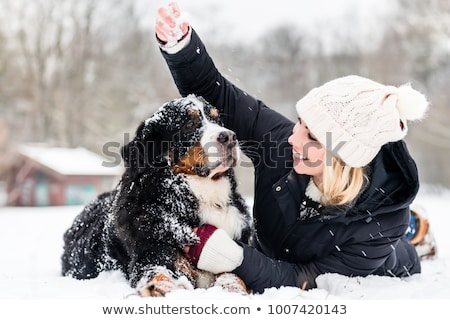 Woman walking Bernese mountain dog on a winter day Stock photo © Kzenon