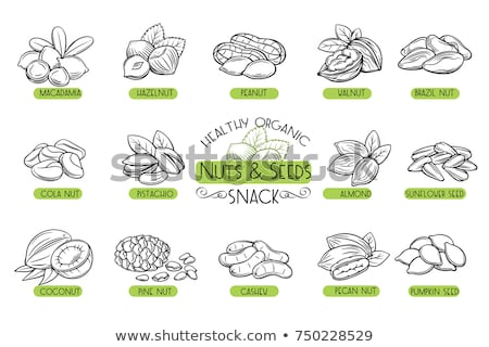 Walnut Nut Icon Vector Outline Illustration Stock photo © pikepicture