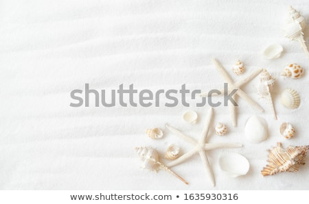 seashells on white sand Stock photo © ozaiachin