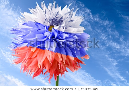 Background of flowers as Russia flag Stock photo © boroda