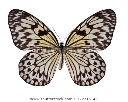 fikir · güneydoğu · Asya · tropikal · kelebek · bahar - stok fotoğraf © creisinger